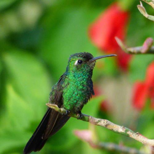 colibris-yann-petit